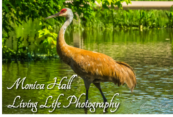 Monica Hall<br />Living Life Photography
